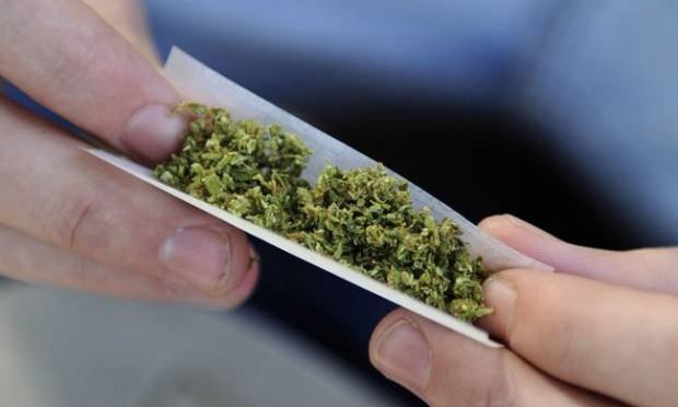 المغرب على رأس قائمة البلدان المورّدة لـ«الحشيش» لأوروبا 78 مليون مواطن في  القارة يتعاطون المخدر | القدس العربي Alquds Newspaper